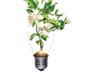 Flower growing out of light bulb