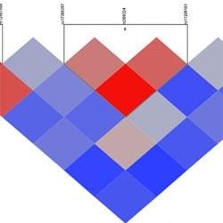 Triangular plots