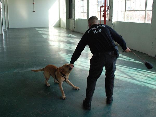 Penn Vet Working Dog Center