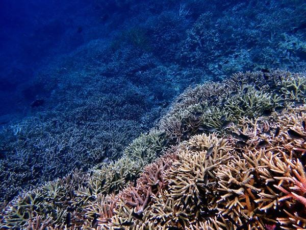 Healthy corals at the base of an active volcano, Banda Islands, Maluku, Indonesia.