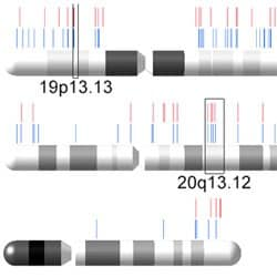 Chromosome plot