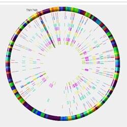 Display singular chromosones as singular.