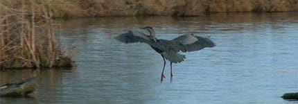 City of Durham - Wildlife on Falls Lake