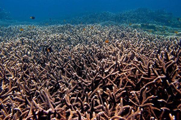 Acroporid corals off Raja Ampat, Papua, Indonesia