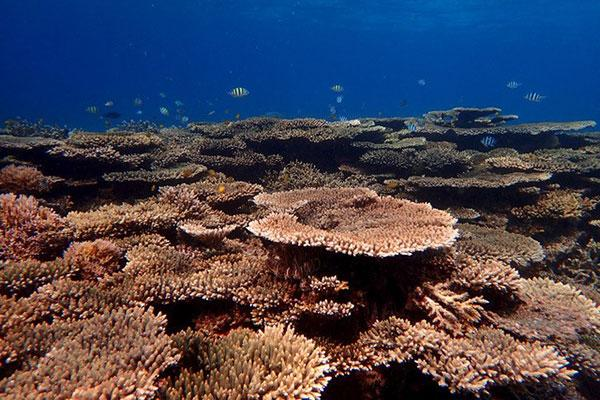 Acroporid corals off Makassar, Sulawesi, Indonesia