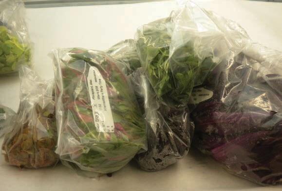 Plants in bags