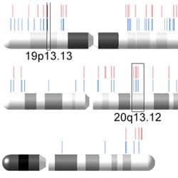 Chromosome plot